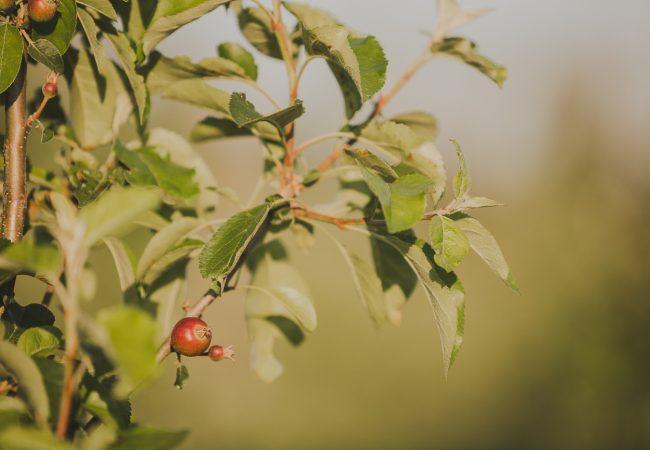 ovocny-sad-lab-13